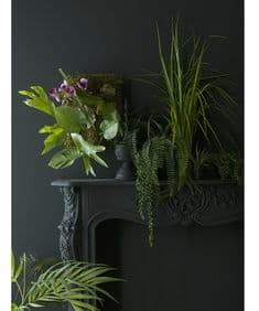 Exotic vertical  garden